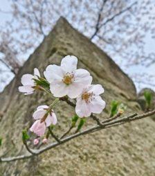 4月9日の誕生石[桜石]