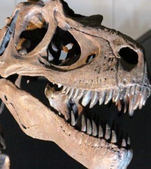 11月10日の誕生石 化石