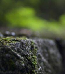 7月21日の誕生石は、心の平和を守ってくれる『モス・アゲート』です。